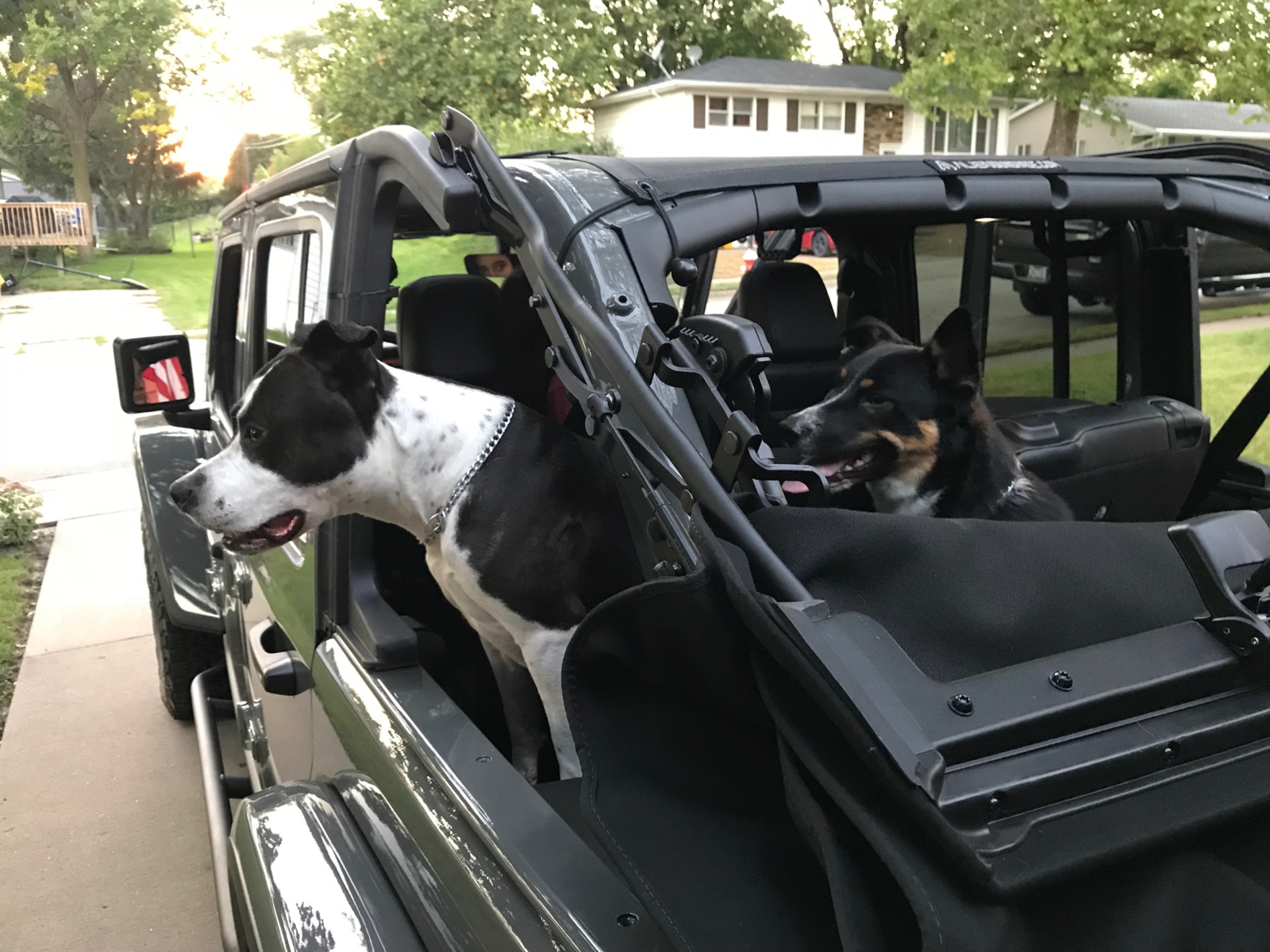 Jeep Dogs.png
