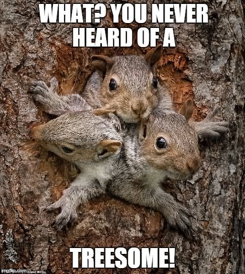 What-You-Never-Heard-Of-A-Treesome-Funny-Squirrel-Meme-Image-for-Facebook.jpg